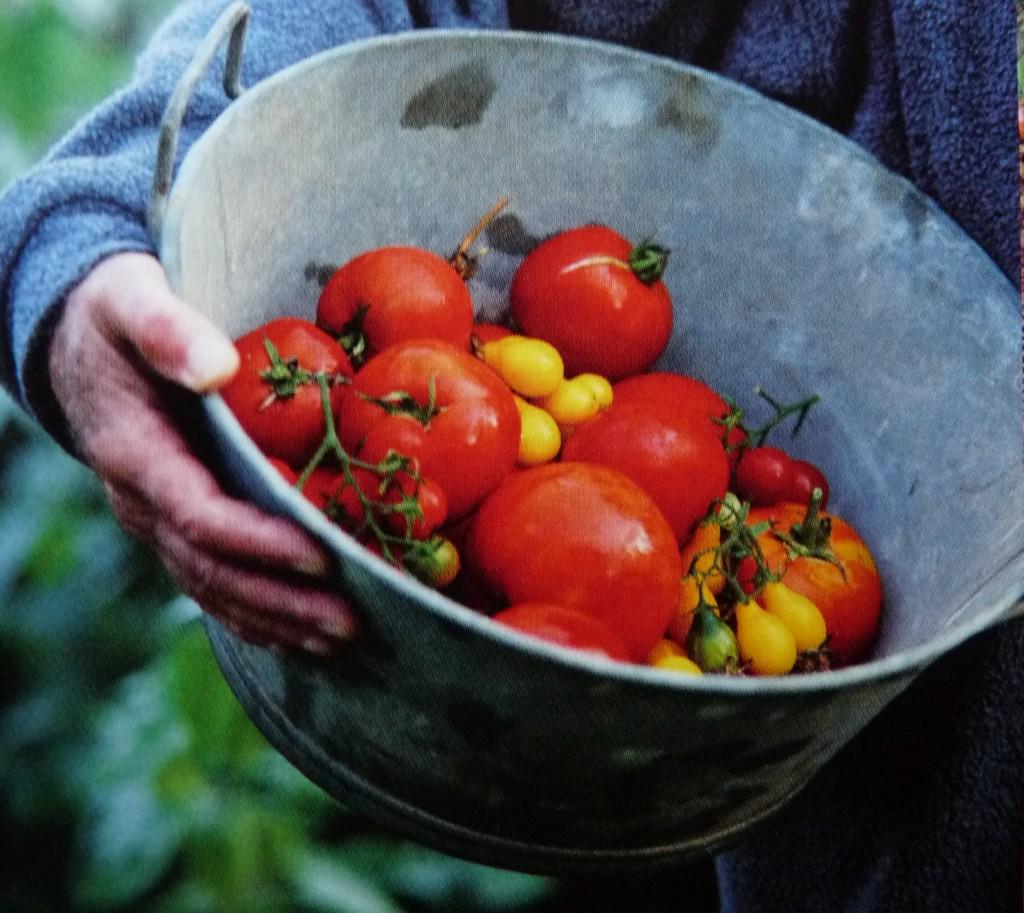bassine de tomates