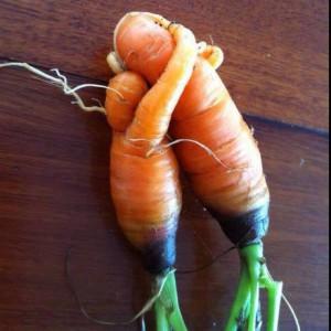 carottes enlacées