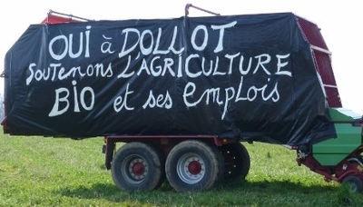 oui à Dollot